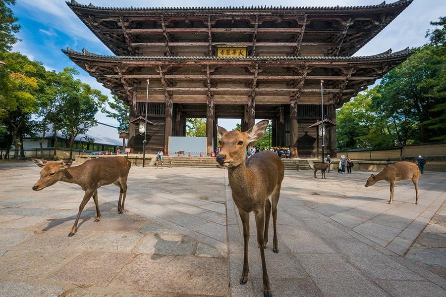 Cong vien Nara, Nhat Ban