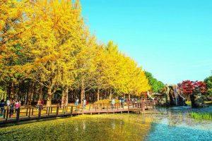 Mùa thu – Thời điểm tốt nhất du lịch Hàn Quốc