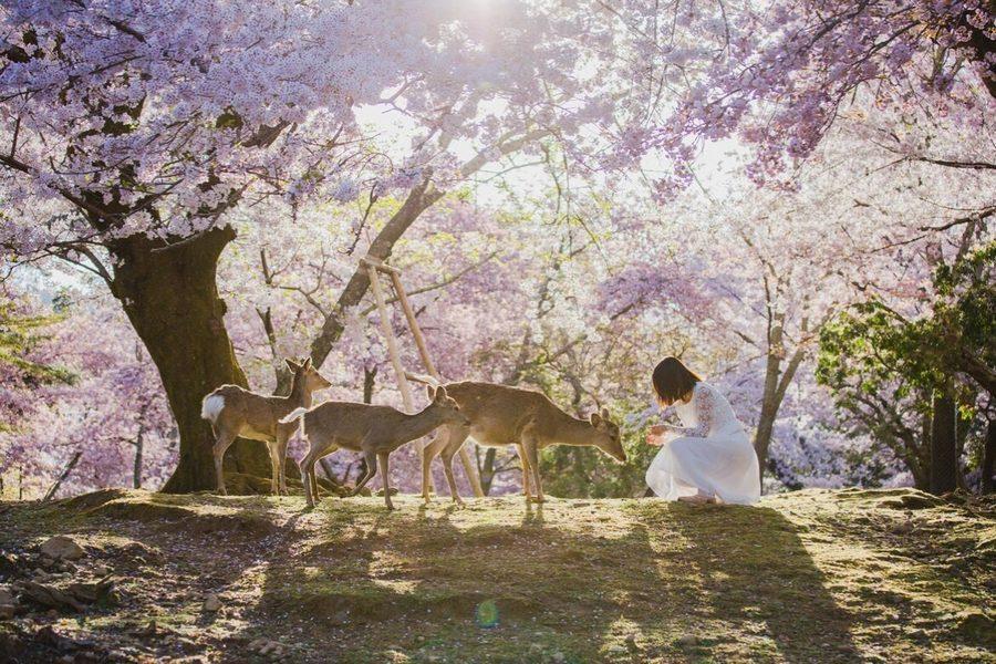 Cong vien Nara